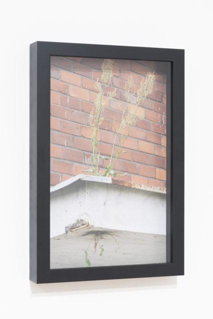 Eksponat | Exhibit 2016, wydruk atramentowy, dibond | inkjet print, dibond, 33x50 cm. Fot. Tytus Szabelski